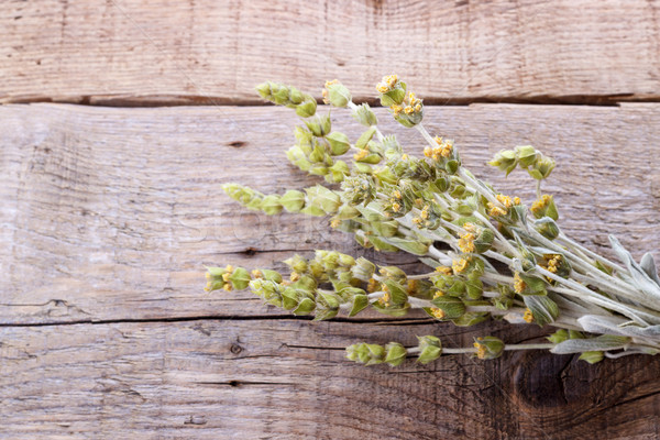 Köteg hegy gyógynövények egészség zöld gyógyszer Stock fotó © Lana_M