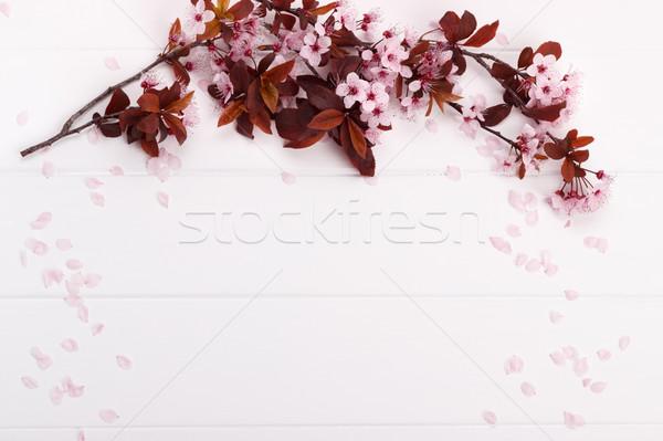 розовый весны Blossom филиала белый деревянный стол Сток-фото © Lana_M