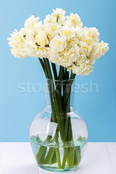 水仙 ガラス 花瓶 白 青 ストックフォト © Lana_M
