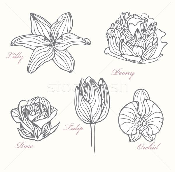Set of flowers Stock photo © lapesnape