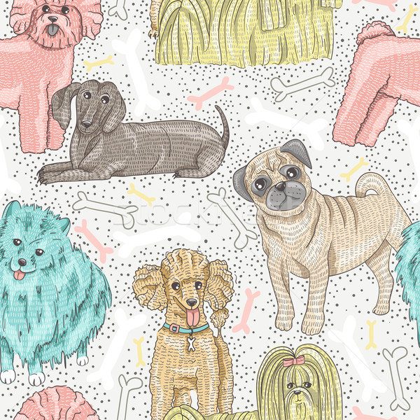 cute seamless vector pattern with little breed dogs. Bichon, pug Stock photo © lapesnape