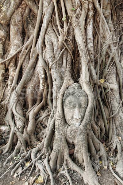 Buda cabeça árvore templo adorar cultura Foto stock © ldambies