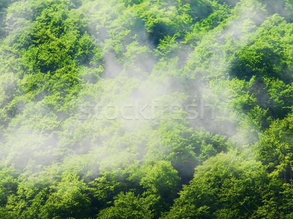 Dente árvores acima floresta montanhas árvore Foto stock © ldambies