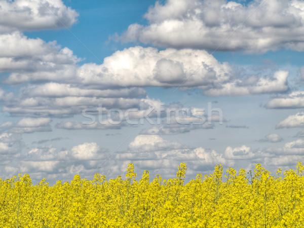 Amarillo violación campo nublado cielo hdr Foto stock © ldambies
