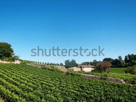 Vignoble village saint vin laisse usine Photo stock © ldambies