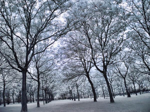 赤外 森林 画像 美しい ツリー 青 ストックフォト © ldambies