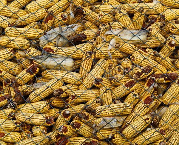 Metálico red maíz grano cosecha Foto stock © ldambies