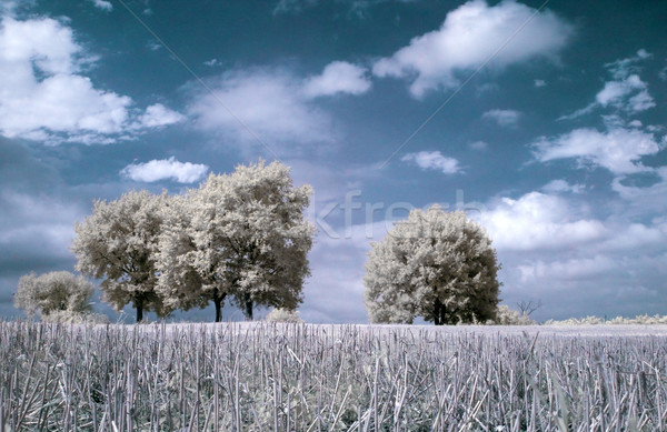 Infrared landscape Stock photo © ldambies