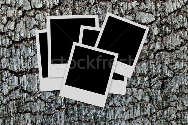 Photo cadres bois vide nature Photo stock © ldambies