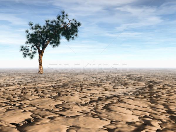 Desert scene Stock photo © ldambies