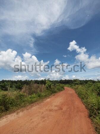 тропические пейзаж Blue Sky Palm нефть Сток-фото © ldambies