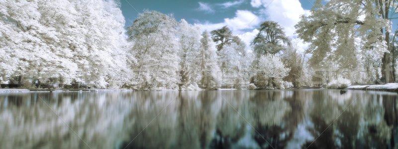 Infrarood panoramisch landschap bomen meer boom Stockfoto © ldambies