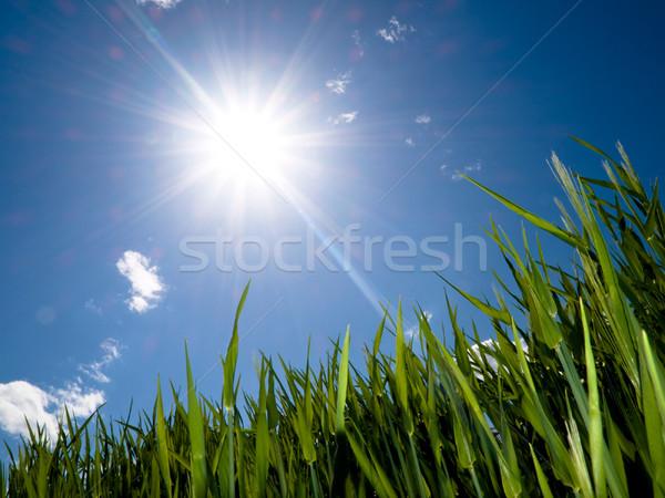 Vert printemps soleil nuages herbe Photo stock © ldambies