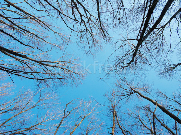 Trees  canopy Stock photo © ldambies