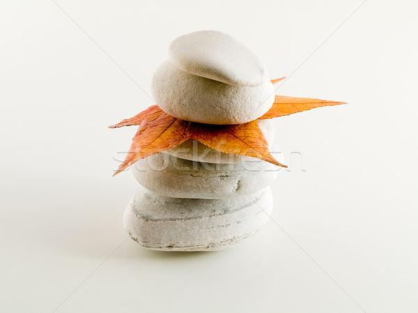 Praia pedras folha branco cair Foto stock © ldambies