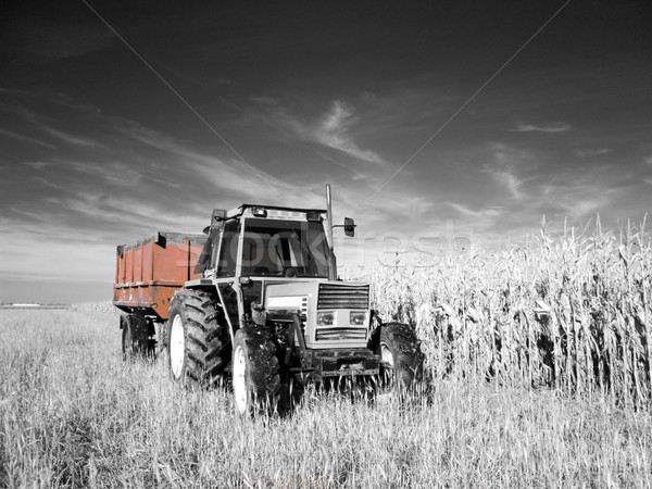 Infrarood trekker foto mais tarwe velden Stockfoto © ldambies
