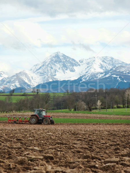 Agricultural scene Stock photo © ldambies