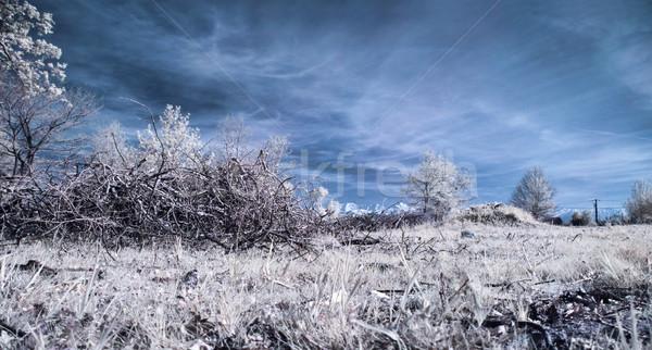 Infrarood landschap panoramisch foto weide berg Stockfoto © ldambies