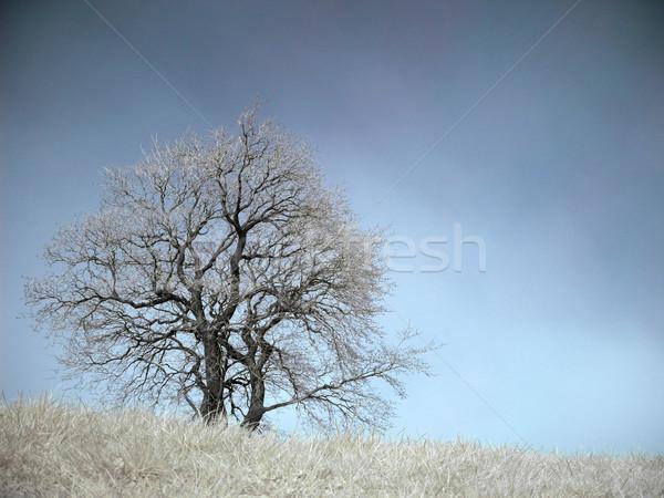 Infravörös tájkép izolált fa tavasz égbolt Stock fotó © ldambies