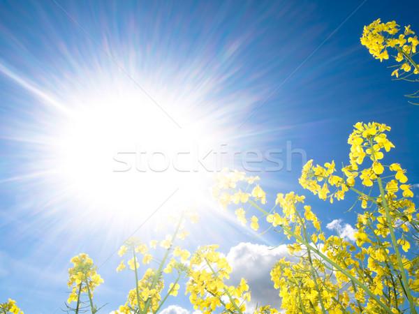 Foto stock: Campo · primavera · sol · nuvens · natureza