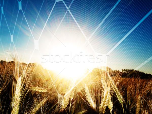 Zonne-energie gouden zonsondergang zon zonnepaneel Stockfoto © ldambies