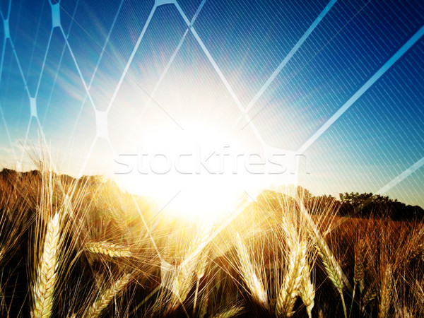 закат солнце Сток-фото © ldambies