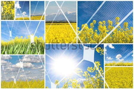 Colza collage Stock photo © ldambies