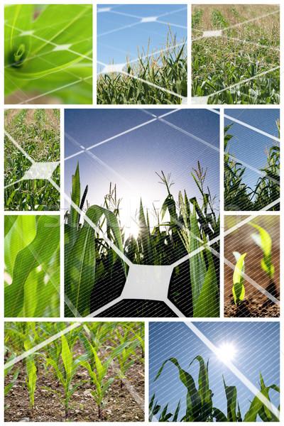Alternativa energia verde mais campo collage Foto d'archivio © ldambies