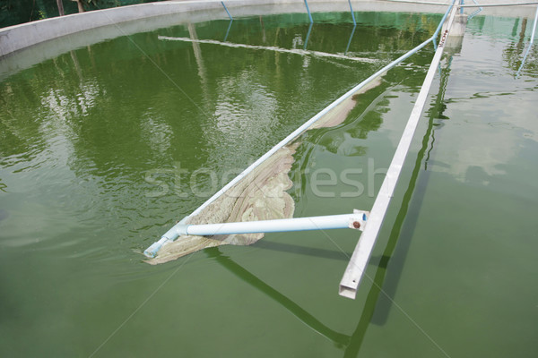 Spirulina harvesting Stock photo © ldambies