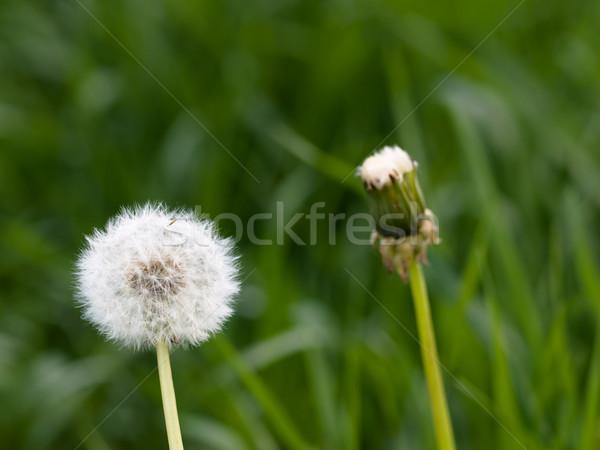 Dois primavera verde natureza agricultura prado Foto stock © ldambies