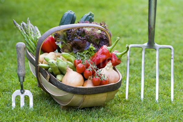 Foto stock: Legumes · casa · crescido · cesta