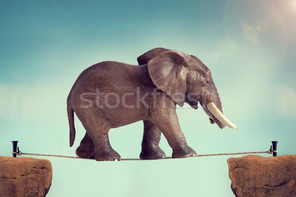 Elefante corda esticada montanha caminhada sozinho corda Foto stock © leeavison