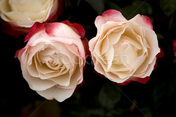 Steeg nostalgie roze bloemen Stockfoto © leeavison