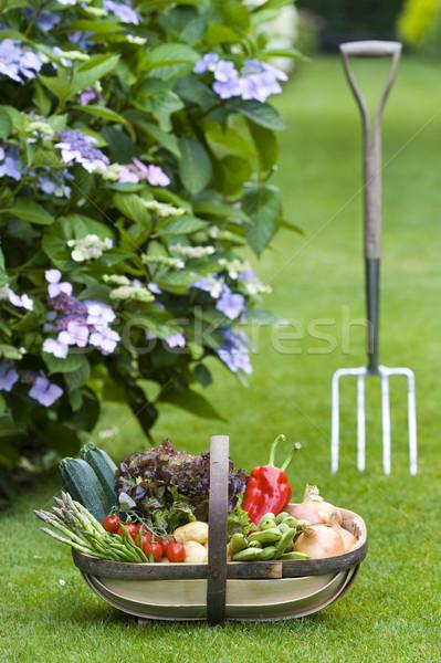 Stock fotó: Frissen · zöldségek · otthon · megnőtt · fából · készült · kosár