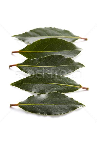 bay leaves Stock photo © leeavison