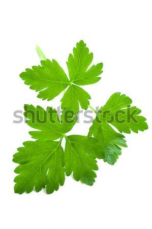 flat leaf parsley close up isolated Stock photo © leeavison