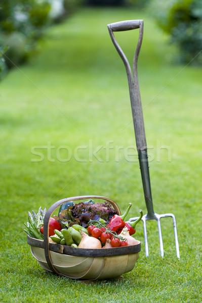 Vers groenten home gegroeid houten mand Stockfoto © leeavison