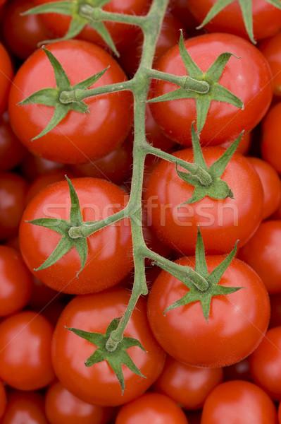 Domates asma taze olgun kırmızı domates Stok fotoğraf © leeavison