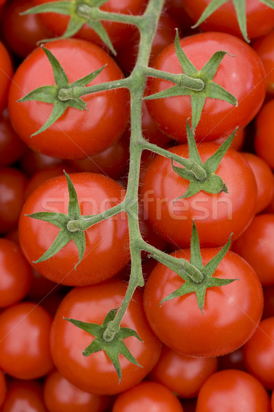 Tomate vid frescos maduro rojo tomates Foto stock © leeavison