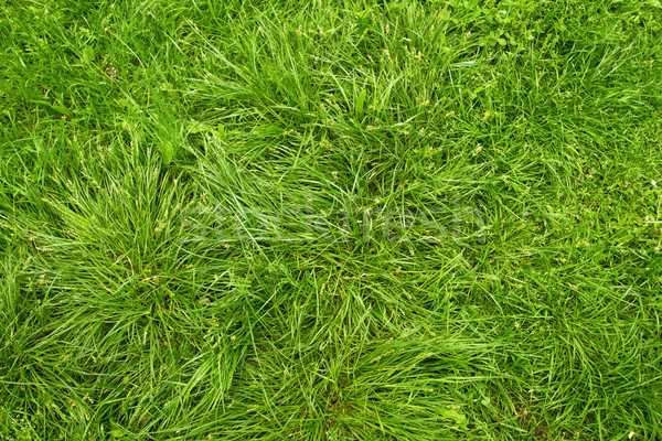 Land leven foto's groen gras gras Stockfoto © leedsn