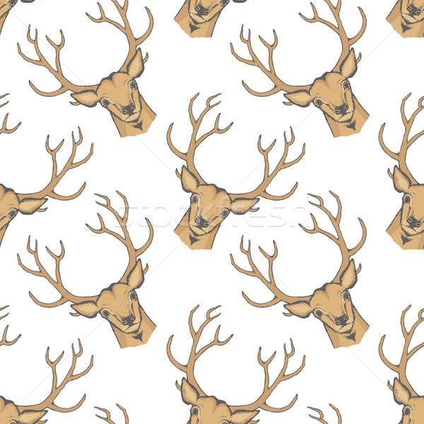 ストックフォト: 鹿 · ベクトル · 実例 · トナカイ · 頭