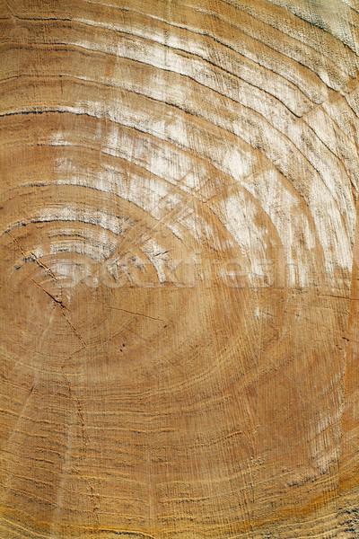 wooden texture Stock photo © leedsn