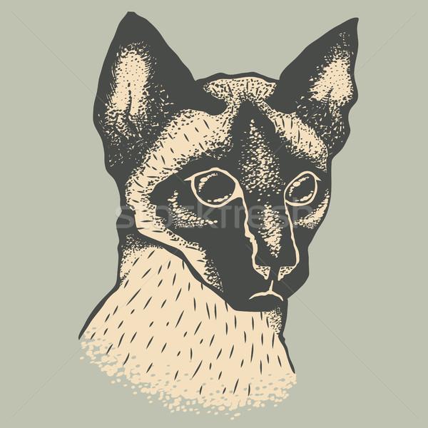 Siam cat vector illustration Stock photo © leedsn