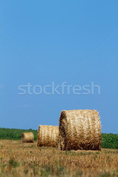 Hay bales Stock photo © leedsn
