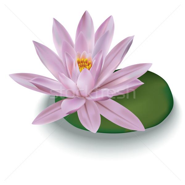 ストックフォト: ピンク · 蓮 · 孤立した · 白 · 花 · 春