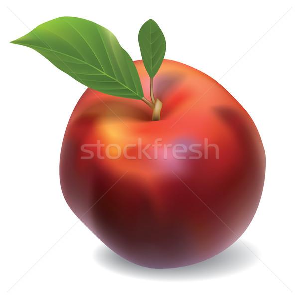 вектора нектарин изолированный белый красный продовольствие Сток-фото © lem