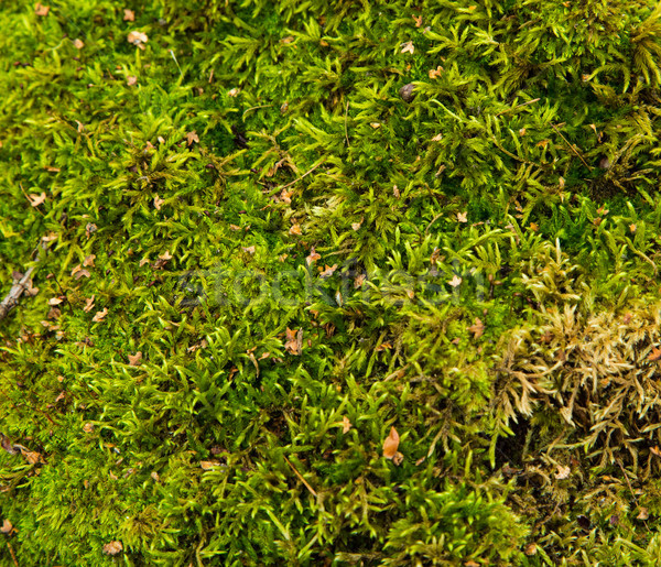 Green wet moss on the ground Stock photo © Len44ik