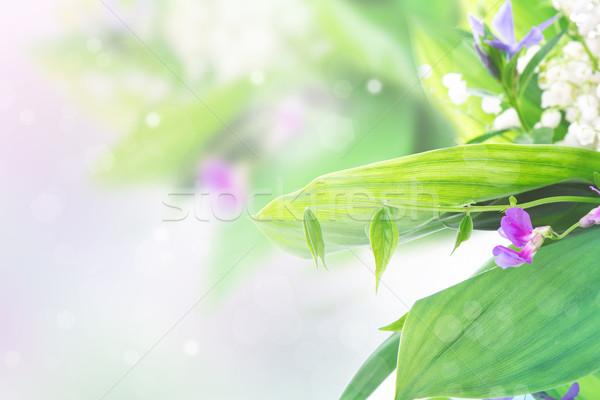 Beautiful floral border of lillies Stock photo © Len44ik