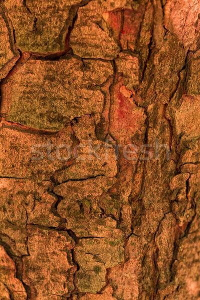 Havlama ağaç ahşap doku orman soyut Stok fotoğraf © Len44ik