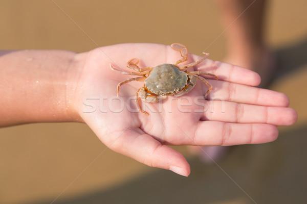 Bebê caranguejo mão mar costa natureza Foto stock © Len44ik